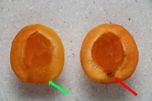 Dried apricots : Photo of step #2