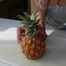 How to peel a pineapple : Photo of step #1