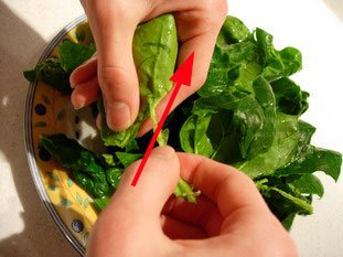 How to prepare spinach : Photo of step #7