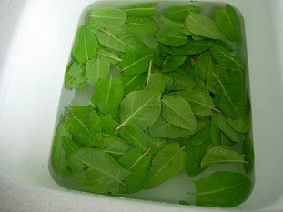 How to prepare sorrel : Photo of step #1