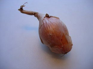 How to prepare an onion or shallot : Photo of step #1