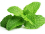 fresh mint leaves
